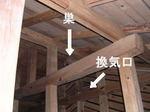 キイロスズメバチの巣の天井裏での位置キイロスズメバチの巣の天井裏での位置(福島県西白河郡、2008年9月下旬).jpg