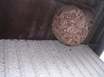軒下に並べて作られたキイロスズメバチの新しい巣、古い巣(福島県石川郡、2008年9月下旬).jpg