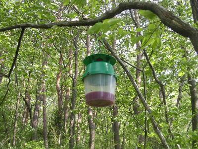 子供の森公園にトラップ設置.jpg