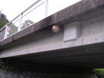 川の土手から見た橋に作られたキイロスズメバチの巣.jpg