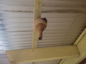 とっくり型のスズメバチの巣を軒下に発見!