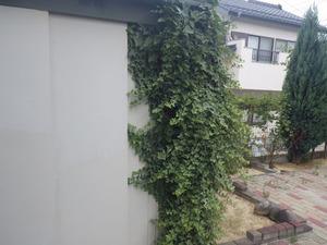 アシナガバチに襲われた物置周辺の様子(須賀川市).jpg