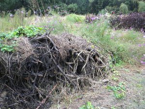 オオスズメバチの巣があったスギの枝葉の小山(福島県田村郡、2010年9月下旬).jpg
