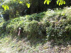 オオスズメバチの巣があった小道の土手(福島県本宮市、2010年9月下旬).jpg