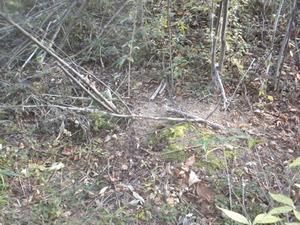 オオスズメバチの巣への出入り口は雑木林の平坦な地面の穴 田村市、10月下旬.jpg
