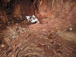 オオスズメバチの巣穴の壁に外皮(福島市).jpg