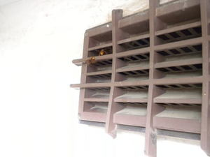 キイロスズメバチが換気口から盛んに出入り(郡山市、2010年10月中旬).jpg