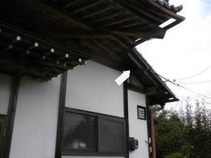 キイロスズメバチが盛んに出入り(福島県西白河郡、2010年10月中旬).jpg