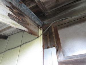 キイロスズメバチが軒下付近の壁の隙間から出入り 田村市、10月中旬.jpg