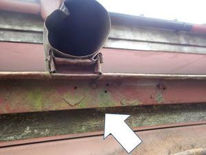キイロスズメバチたちが潜り込むのは屋根のトタン板の下(福島県平田村).jpg