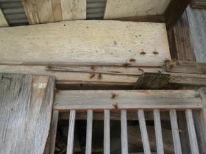 キイロスズメバチたちが納屋外壁に勢ぞろい(郡山市、2010年9下旬).jpg