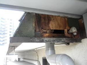 キイロスズメバチの壁内の巣(郡山市、2010年9月下旬).jpg