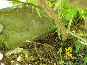 キイロスズメバチの巣が土の中に完全に埋没しています(郡山市).jpg