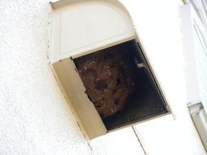 キイロスズメバチの巣が換気扇フードで満杯(郡山市、2010年10月上旬).jpg
