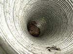 キイロスズメバチの巣が風呂場の換気口奥に(郡山市、2010年10月中旬).jpg