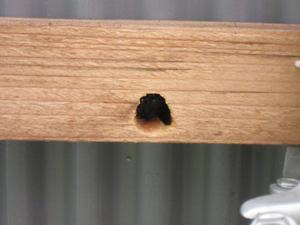 クマバチが木材に開けた巣穴 郡山市、2012年.jpg