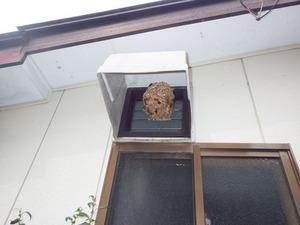 コガタスズメバチが換気扇フードに巣を作っている様子(郡山市).jpg