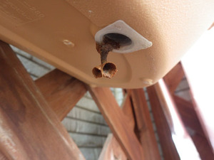 コガタスズメバチの女王蜂が植木鉢の底に作成中の3つの育房室(伊達市).jpg