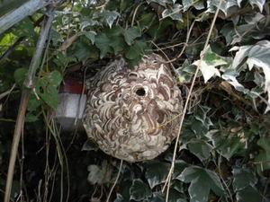 コガタスズメバチの巣が軒下に(郡山市、2010年10月中旬).jpg