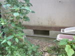 スズメバチが出入りする床下の換気口(福島県石川郡、2010年9月上旬).jpg