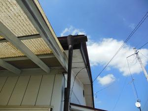 スズメバチが出入りする東側屋根の様子 福島、8月初旬