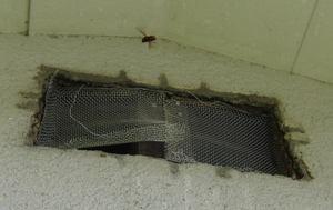 スズメバチが換気口に張っているネットの隙間を探索 福島県田村郡、2012年.jpg