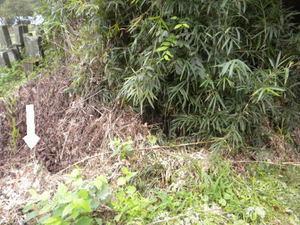 スズメバチが飛び回る雑草生い茂る空き地(福島県西白河郡、2010年9月下旬).jpg