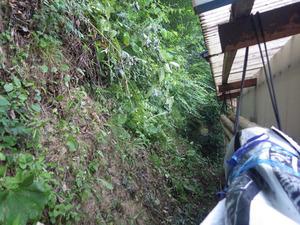 スズメバチの巣が土の中にあった土手(田村市).jpg