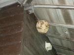 スズメバチの巣が山小屋の軒下に(福島県二本松市、2010年9月上旬).jpg