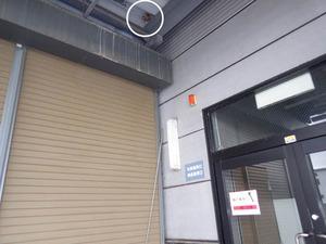 スズメバチの巣が社員通用口の真上に(郡山市).jpg