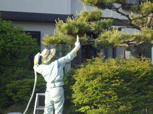 セイヨウミツバチの分蜂群を吸引捕獲中(福島県三春町).jpg