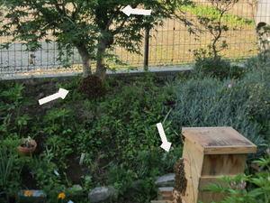 セイヨウミツバチの蜂球群れが3分割に 郡山市、2012年.jpg