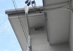セグロアシナガバチたちが巣もない壁に群れた集団(郡山市、2010年9月中旬).jpg