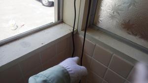 三春町でミツバチの巣がある室内の壁.jpg