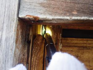 三春町で外壁から覗き込んで見えたミツバチの巣.jpg