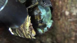 三春町で節穴から覗いたスズメバチの巣.png