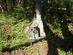 丸太をくりぬいた巣箱でニホンミツバチを飼育していました(いわき市).jpg
