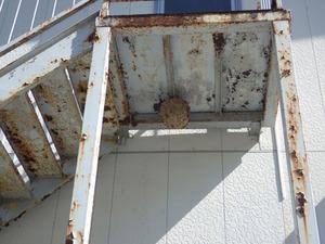 二本松市スズメバチの巣を駆除.jpg