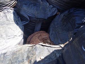 仮置き場でフレコンバッグの空隙にあったオオスズメバチの巣(田村市).jpg