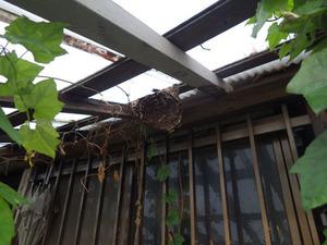 伊達市で軒下に残ったスズメバチの巣の残骸.jpg