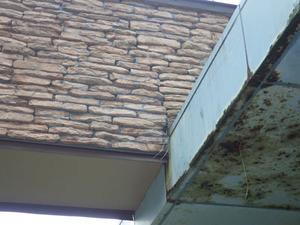体育館の壁の中にスズメバチが出入りする穴(小野町).jpg