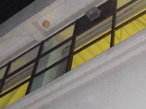 体育館の15mほどの高さにあるキイロスズメバチの巣(本宮市).jpg