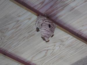 大玉村でスズメバチ駆除-納屋の部屋の引っ越し巣.jpg
