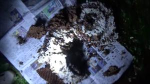 大玉村で駆除したスズメバチの巣.png