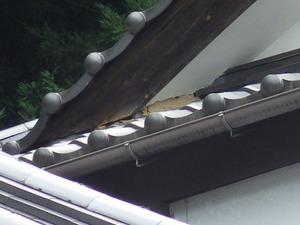小野町でスズメバチが瓦屋根で出入り.jpg