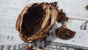 小野町で駆除したスズメバチの巣.jpg