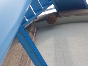 小野町で駆除するスズメバチの巣.jpg