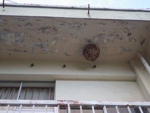 廃校になった小学校の2階の軒下にあったキイロスズメバチの巣(郡山市).jpg