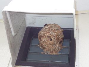 換気扇フード内のコガタスズメバチの巣(郡山市).jpg