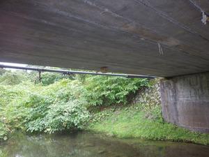 橋の下にスズメバチの巣(福島県猪苗代町).jpg
